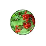other_photos_3 Hat Clip Ball Marker (10 pack)