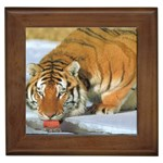 tiger_4 Framed Tile