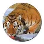 tiger_4 Round Mousepad