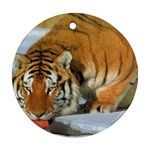 tiger_4 Ornament (Round)