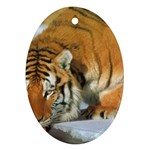 tiger_4 Ornament (Oval)