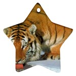 tiger_4 Ornament (Star)