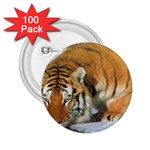 tiger_4 2.25  Button (100 pack)