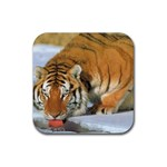 tiger_4 Rubber Square Coaster (4 pack)