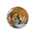 tiger_4 Rubber Round Coaster (4 pack)