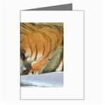tiger_4 Greeting Cards (Pkg of 8)