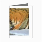 tiger_4 Mini Greeting Cards (Pkg of 8)