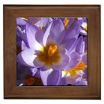 wallpaper_13855 Framed Tile