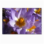 wallpaper_13855 Postcards 5  x 7  (Pkg of 10)