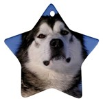 Alaskan Malamute Dog Ornament (Star)