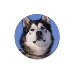 Alaskan Malamute Dog Magnet 3  (Round) from UrbanLoad.com Front