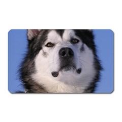 Alaskan Malamute Dog Magnet (Rectangular) from UrbanLoad.com Front