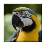 Handsome Parrot Tile Coaster