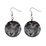 Chartreux Cat 1  Button Earrings