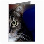 vinni Bright eyes Greeting Card