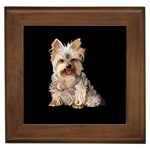 Yorkshire Terrier Gifts, Dog Merchandise, Custom Dog Gifts Ideas, Breed Information & Dog Photos