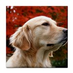 dog-photo cute Tile Coaster