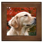 dog-photo cute Framed Tile