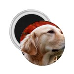 dog-photo cute 2.25  Magnet