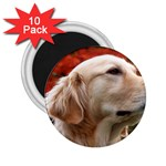 dog-photo cute 2.25  Magnet (10 pack)