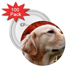 dog-photo cute 2.25  Button (100 pack)