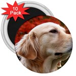 dog-photo cute 3  Magnet (10 pack)