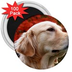 dog-photo cute 3  Magnet (100 pack)
