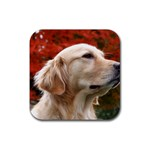 dog-photo cute Rubber Square Coaster (4 pack)