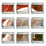 dog-photo cute 9mm Italian Charm (9 pack)