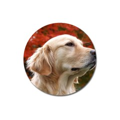 Dog Photo Cute Magnet 3  (round) by swimsuitscccc