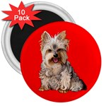 Yorkshire Terrier Yorkie Dog Gifts BR 3  Magnet (10 pack)