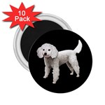 White Poodle Dog Gifts BB 2.25  Magnet (10 pack)