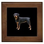 Rottweiler Gifts, Dog Merchandise, Custom Dog Gift Ideas, Breed Information & Dog Photos