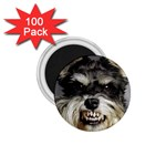 Animals Dogs Funny Dog 013643  1.75  Magnet (100 pack)