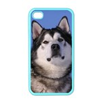 Alaskan Malamute Dog Apple iPhone 4 Case (Color)