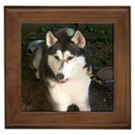 Alaskan Malamute Gifts, Dog Merchandise, Custom Dog Gift Ideas, Breed Information & Dog Photos