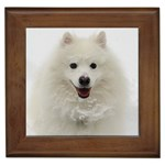 American Eskimo Dog Gifts, Dog Merchandise, Custom Dog Gift Ideas, Breed Information & Dog Photos