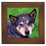 Australian Cattle Dog Gifts, Dog Merchandise, Custom Dog Gift Ideas, Breed Information & Dog Photos