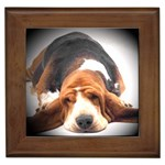 Basset Hound Gifts, Dog Merchandise, Custom Dog Gift Ideas, Breed Information & Dog Photos