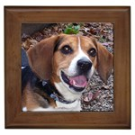 Beagle Gifts, Dog Merchandise, Custom Dog Gift Ideas, Breed Information & Dog Photos
