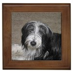 Bearded Collie Gifts, Dog Merchandise, Custom Dog Gift Ideas, Breed Information & Dog Photos
