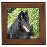 Belgian Sheepdog Gifts, Dog Merchandise, Custom Dog Gift Ideas, Breed Information & Dog Photos