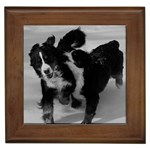 Bernese Mountain Dog Gifts, Dog Merchandise, Custom Dog Gift Ideas, Breed Information & Dog Photos