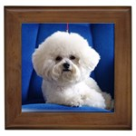 Bichon Frise Gifts, Dog Merchandise, Custom Dog Gift Ideas, Breed Information & Dog Photos