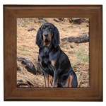 Black and Tan Coonhound Gifts, Dog Merchandise, Custom Dog Gift Ideas, Breed Information & Dog Photos