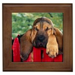 Bloodhound Gifts, Dog Merchandise, Custom Dog Gift Ideas, Breed Information & Dog Photos