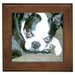 Boston Terrier Gifts, Dog Merchandise, Custom Dog Gift Ideas, Breed Information & Dog Photos