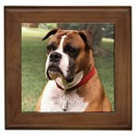 Boxer Gifts, Dog Merchandise, Custom Dog Gift Ideas, Breed Information & Dog Photos