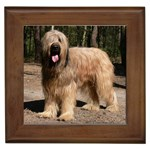 Briard Gifts, Dog Merchandise, Custom Dog Gift Ideas, Breed Information & Dog Photos