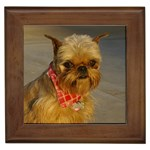 Brussels Griffon Gifts, Dog Merchandise, Custom Dog Gift Ideas, Breed Information & Dog Photos